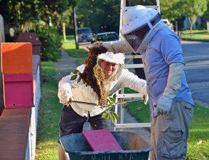 daniel-howard-engineering-student-bees