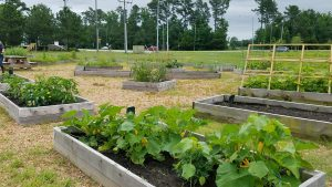 Virginia Beach Community Garden with fresh crops to feed families.